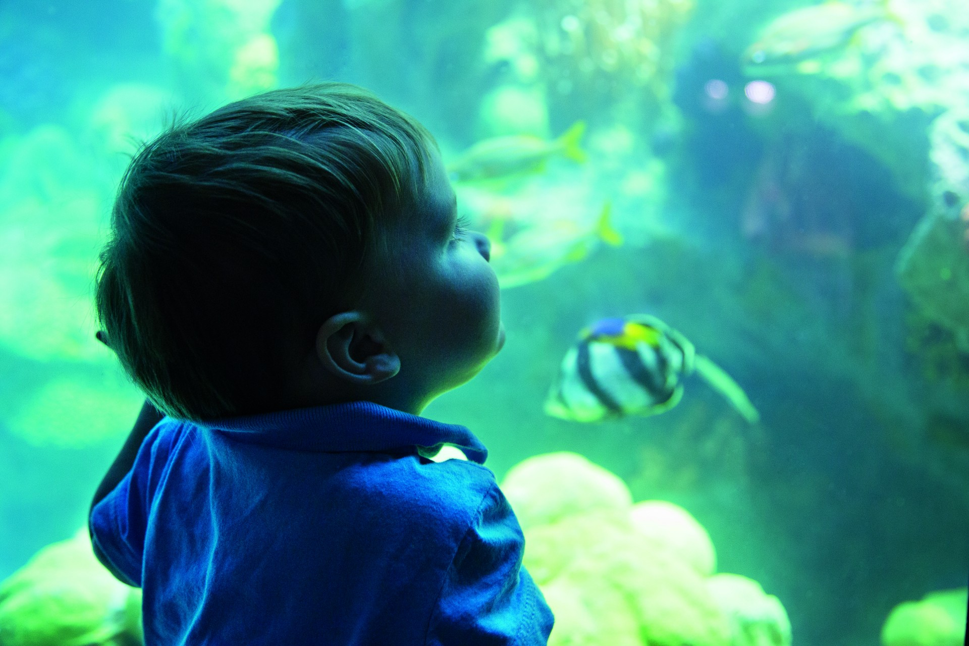 The new scheme has also enhanced the viewing experience of the popular Giant Ocean Tank, which now has three times the amount of animals it once held.