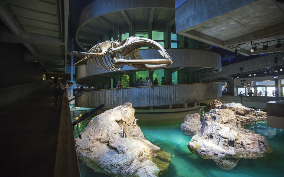 The landmark New England Aquarium (NEAQ) recently completed an ambitious six-year renovation, which included modernizing its antiquated lighting scheme.