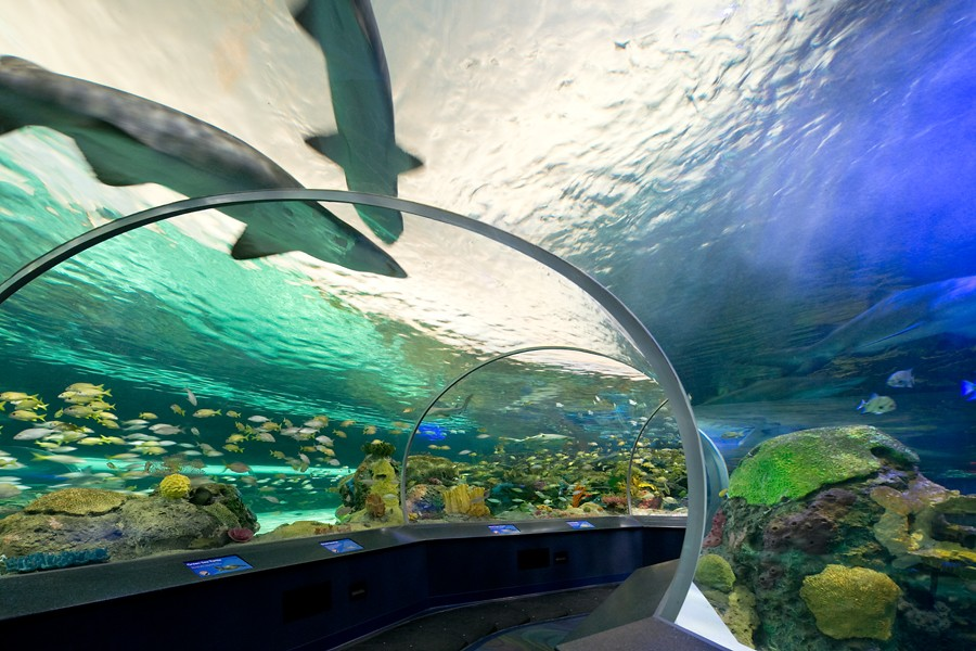 Fully dimmable, the luminaires can be individually controlled, allowing the aquarium to better mimic natural environments, with slow fades and changing moods.